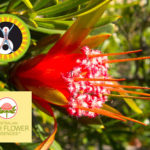 Test radiestesico delle Essenze Australian Bush Flowers